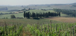 Weinlandseminar Italien
